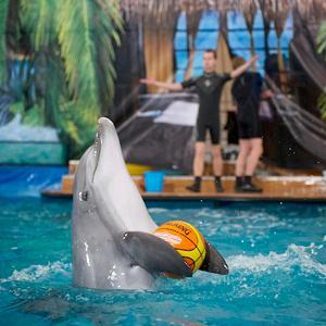 Дельфинарии, океанариумы Батыревы
