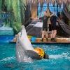 Дельфинарии, океанариумы в Батыреве