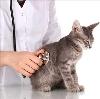 Ветеринарные клиники в Батыреве